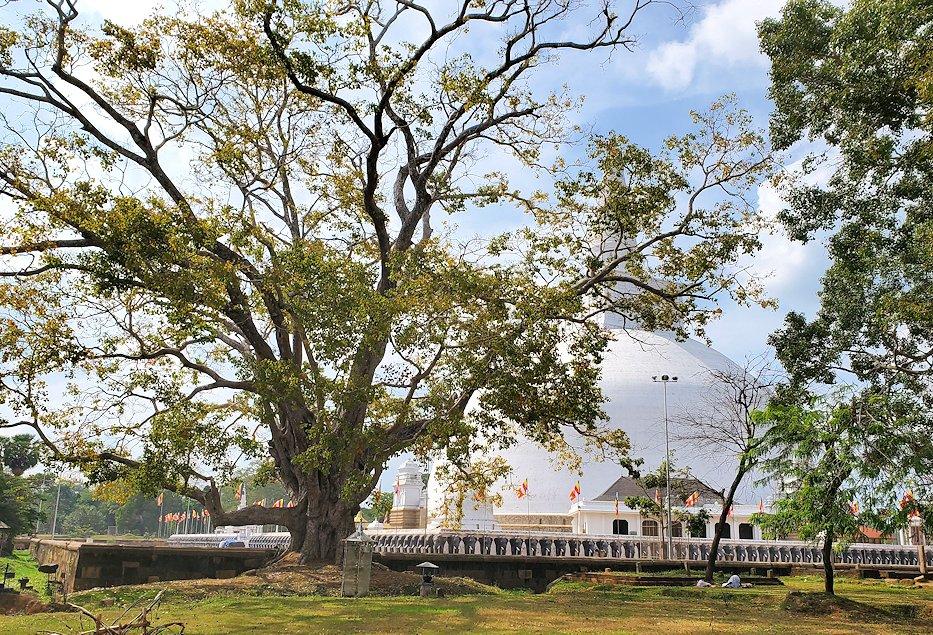 ルワンウェリ・サーヤ大塔が段々近くに見えてくる