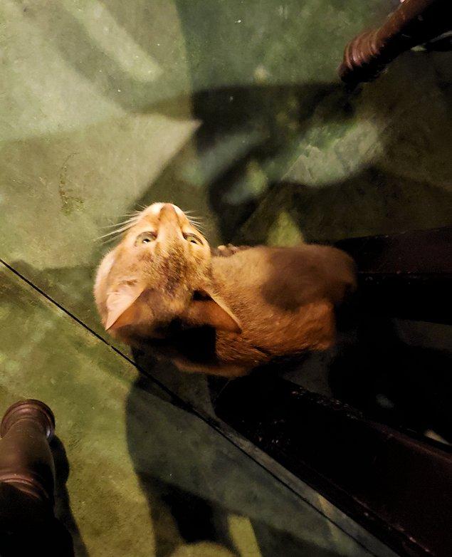 「カサッパ ライオンズ ロック」ホテルの夕食会場で足元にやって来た猫ちゃん