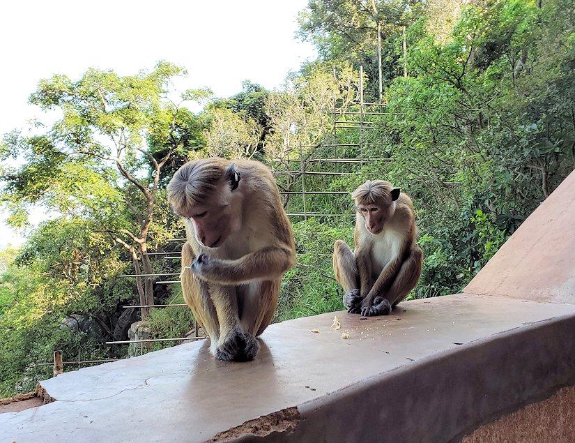 シギリヤロックの頂上に向かう階段に現れたお猿さん達