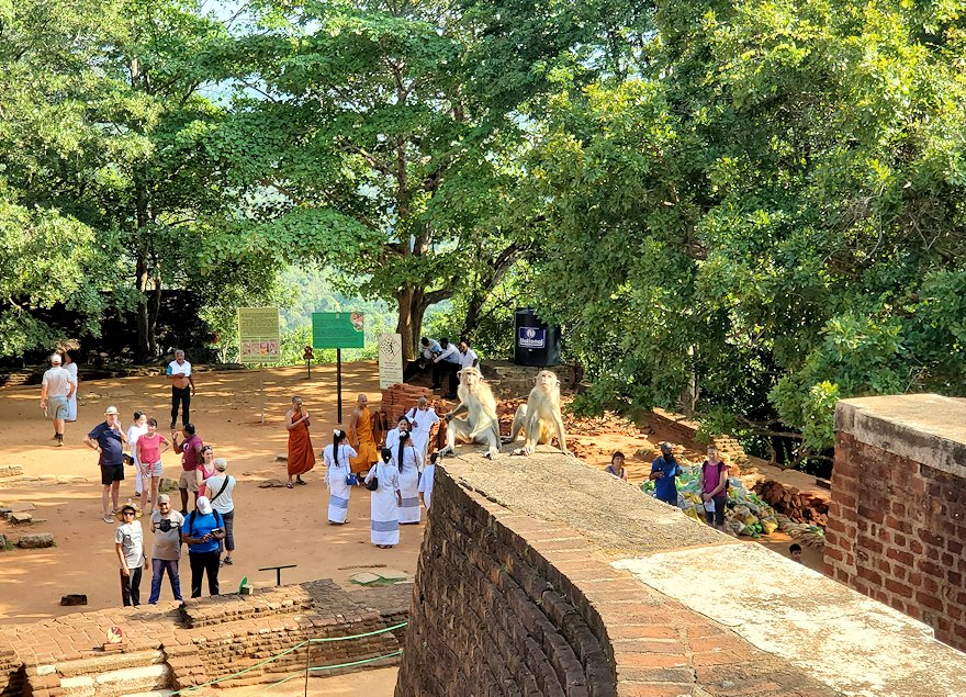 シギリヤロックの上にある「ライオンの入口」から登って行く人達を眺めるお猿さん