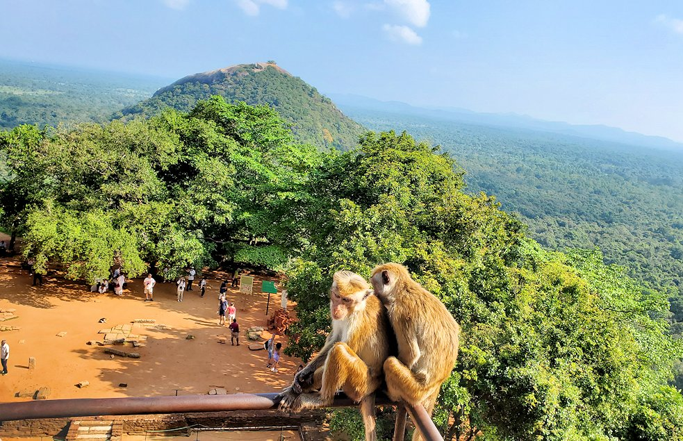 シギリヤロックの頂上へと繋がる階段を登る人達を眺めるお猿さん-2