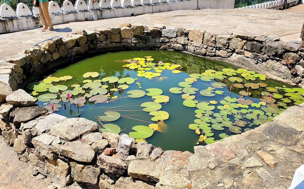 ダンブッラの石窟寺院内の第二洞窟の前の池に浮かぶ蓮の葉