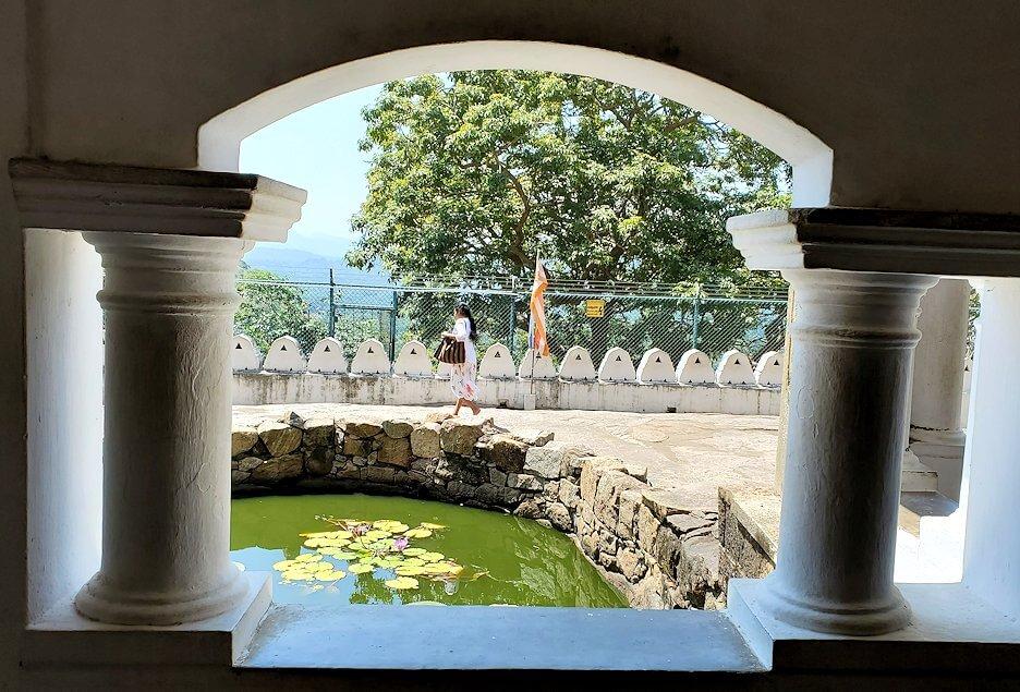 ダンブッラの石窟寺院内の第二洞窟の前の池に浮かぶ蓮の葉-2