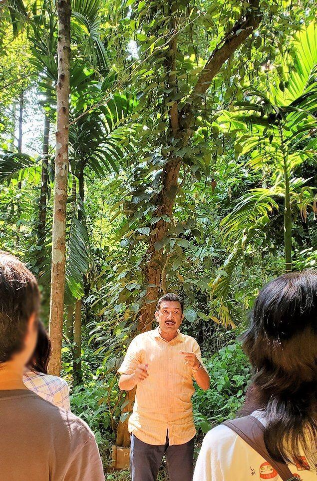「Luck Grove Spice Garden」というスパイス屋さんに生えている木