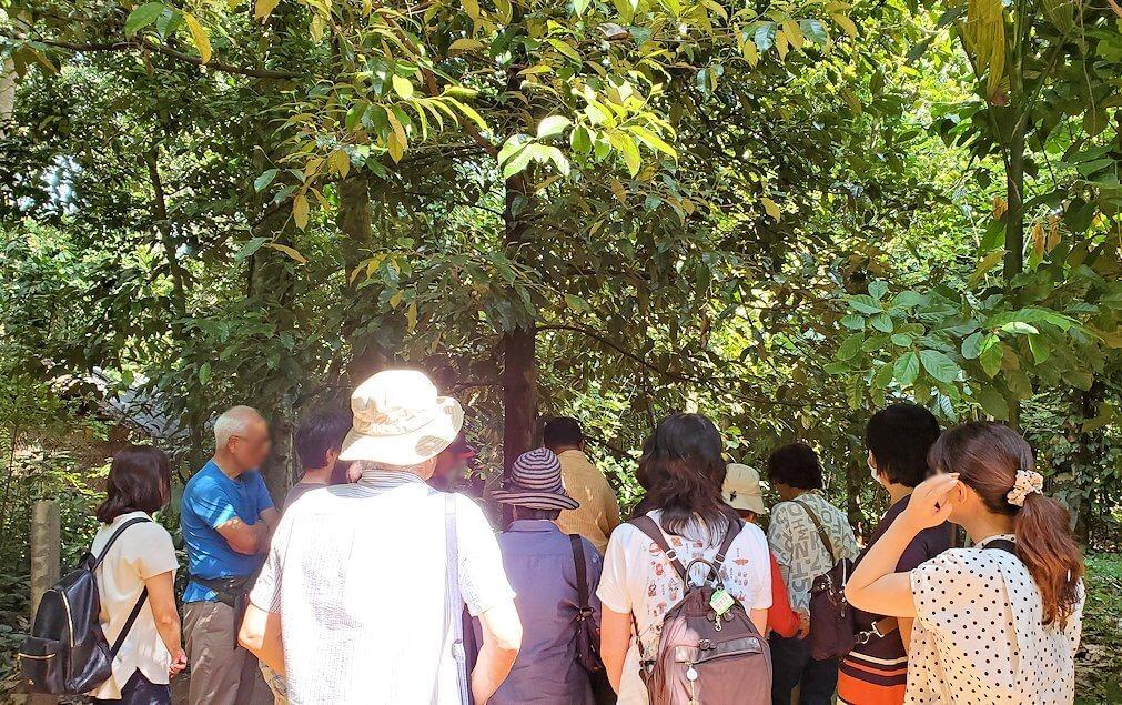 「Luck Grove Spice Garden」というスパイス屋さんに生えている木を眺める-2