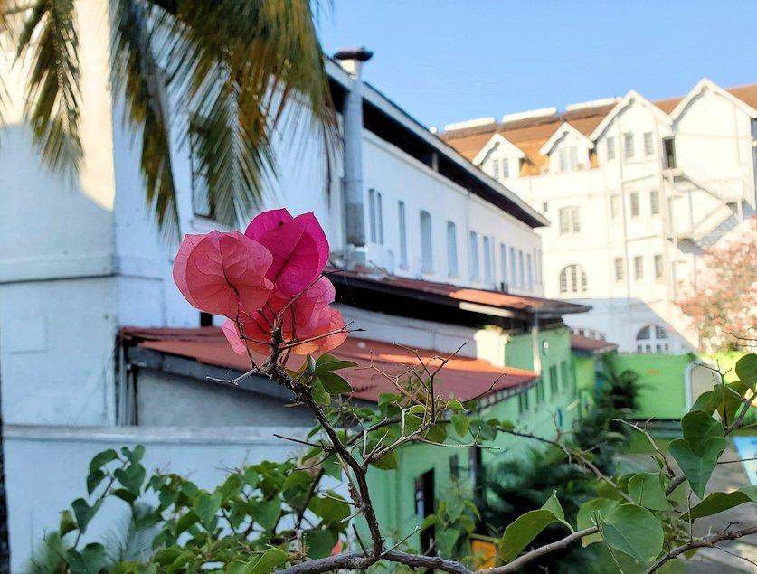 キャンディのクイーンズホテル内にあるプールサイドに咲いていた花