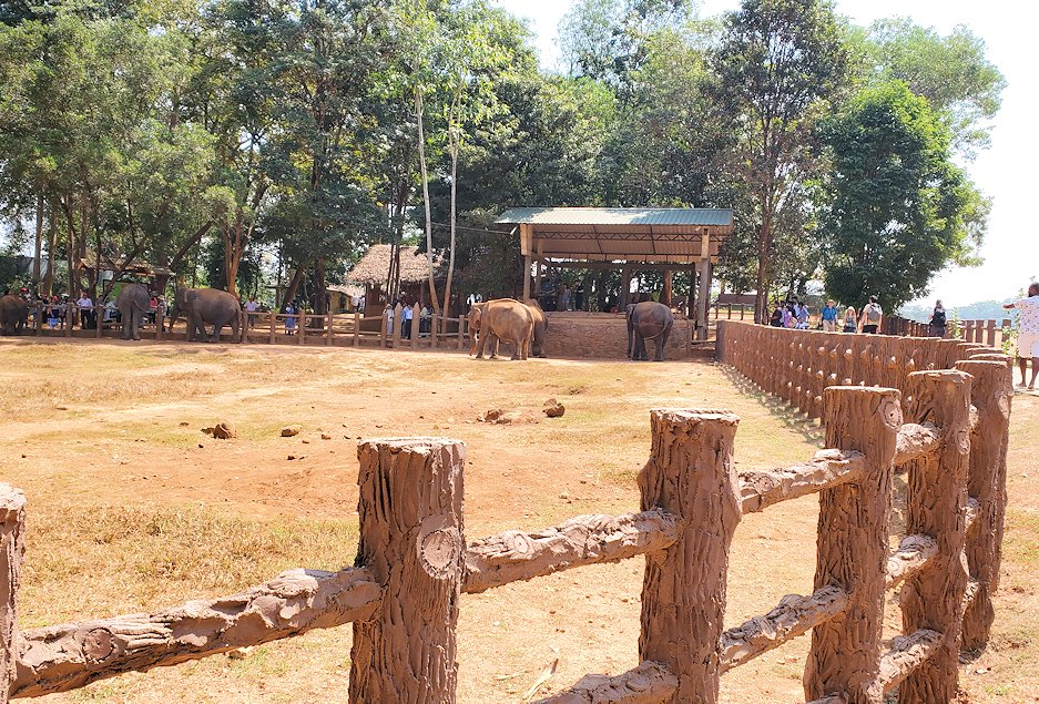 ピンナワラの「ゾウの孤児院」の敷地内で、飼育されているゾウさん達