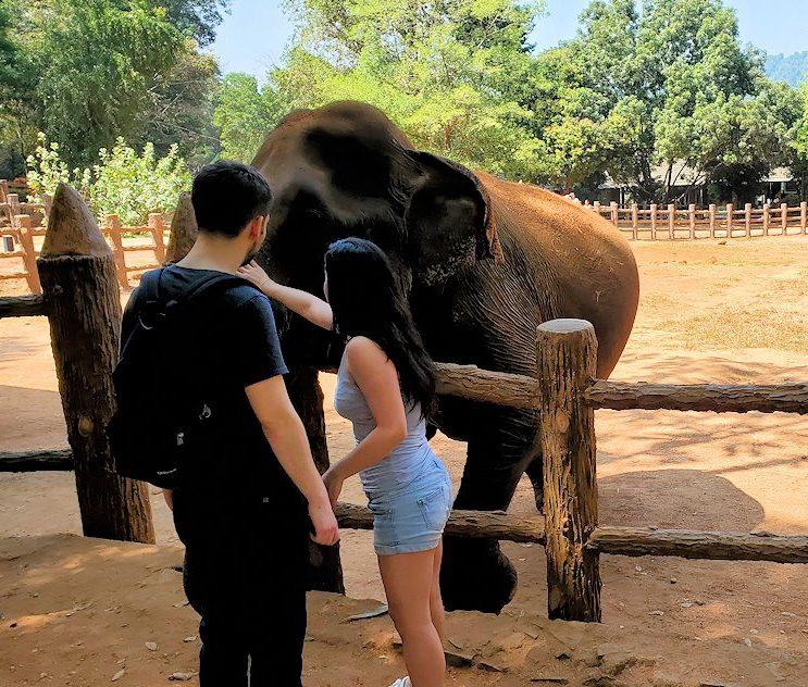 ピンナワラの「ゾウの孤児院」の敷地内で、飼育されているゾウさん達に触れる人