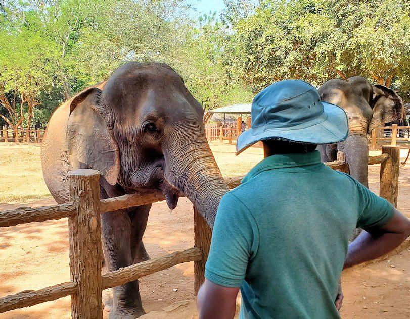 ピンナワラの「ゾウの孤児院」で、間直に見えるゾウさん