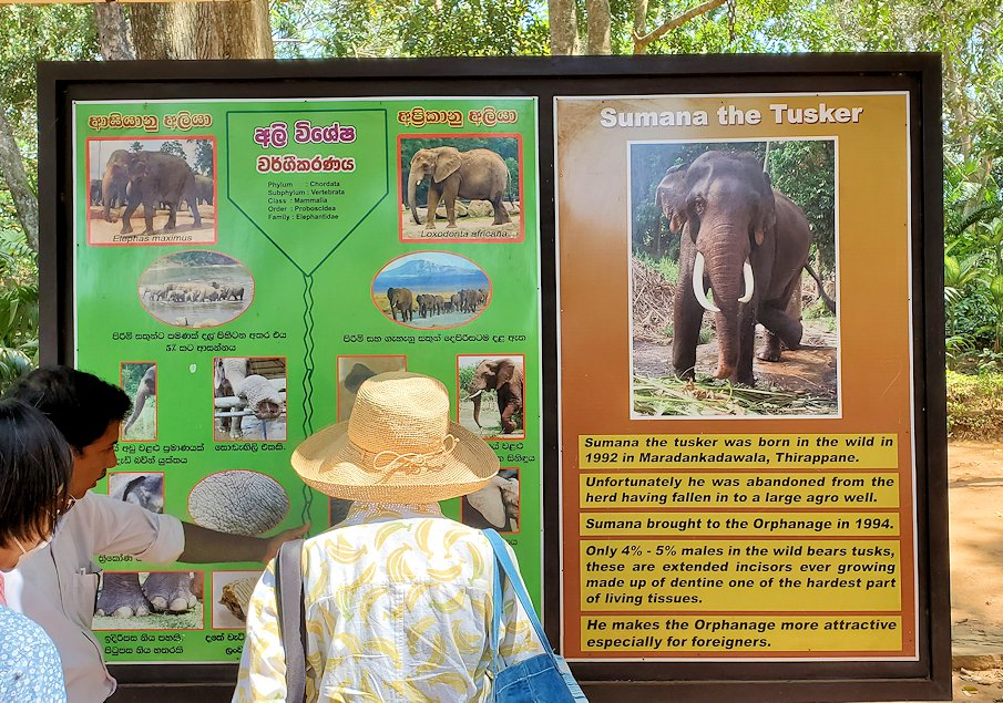 ピンナワラの「ゾウの孤児院」で、ゾウの説明板