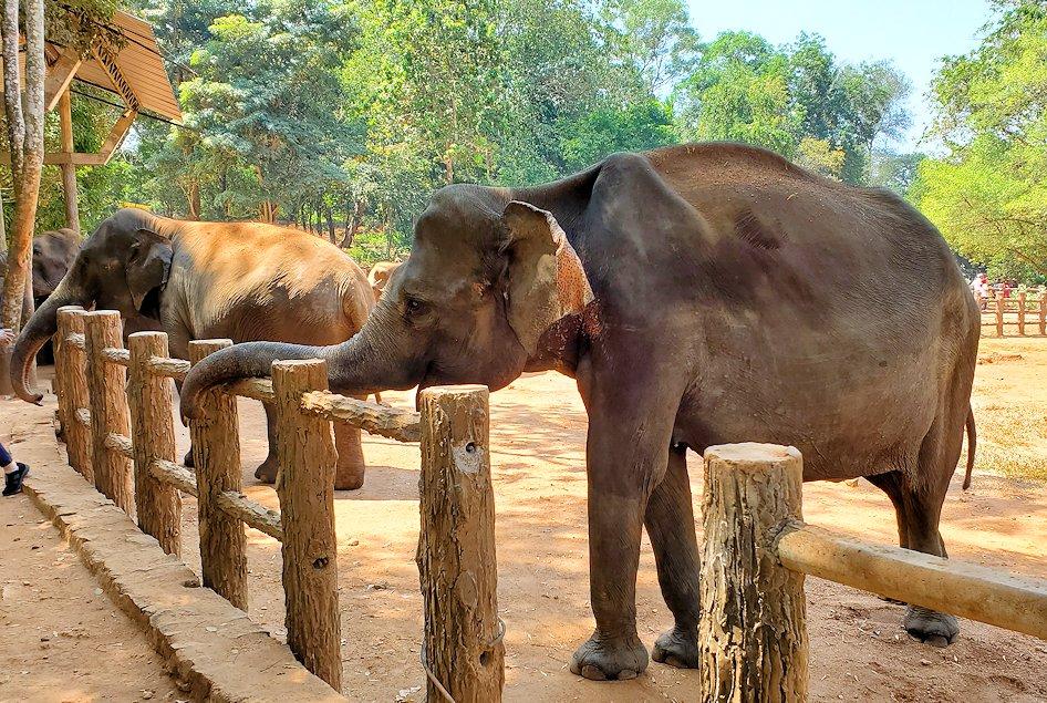 ピンナワラの「ゾウの孤児院」で、間直に見えるゾウさんを眺める