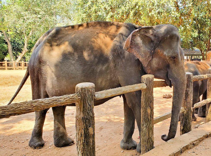 ピンナワラの「ゾウの孤児院」で、間直に見えるゾウさんを眺める-3