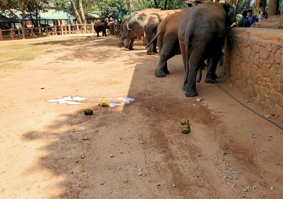 ピンナワラの「ゾウの孤児院」敷地内に転がる、大きなゾウの糞