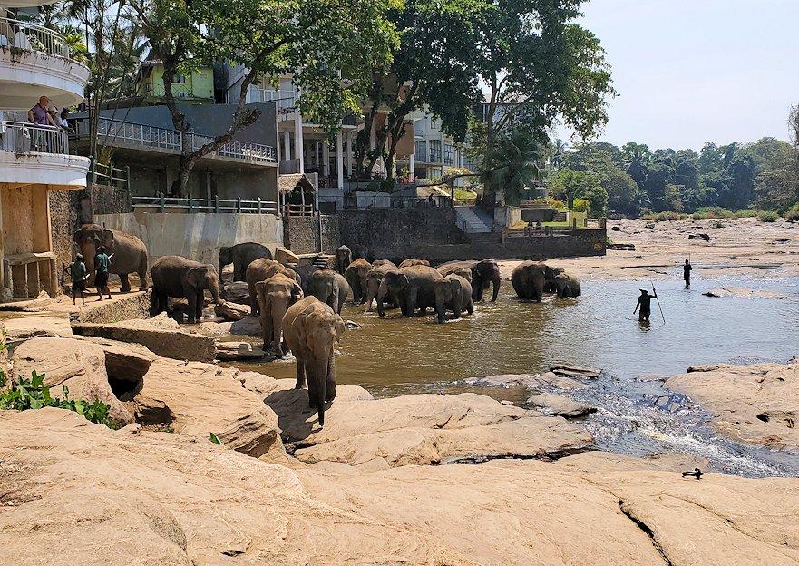 ピンナワラでゾウの水浴び場の景色