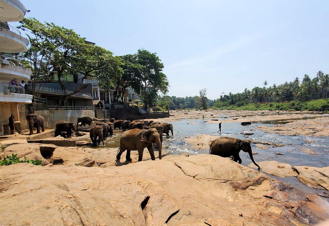 ピンナワラでゾウの水浴び場の景色-2