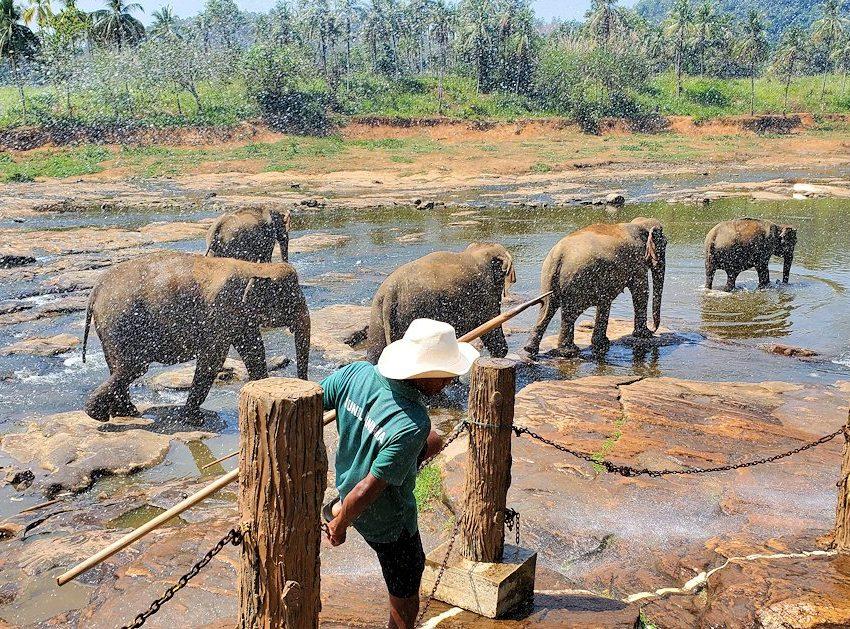 ピンナワラでゾウの水浴び場を眺める