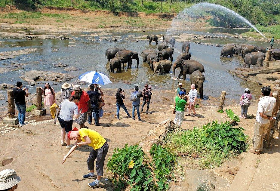 ピンナワラでゾウの水浴び場を見る