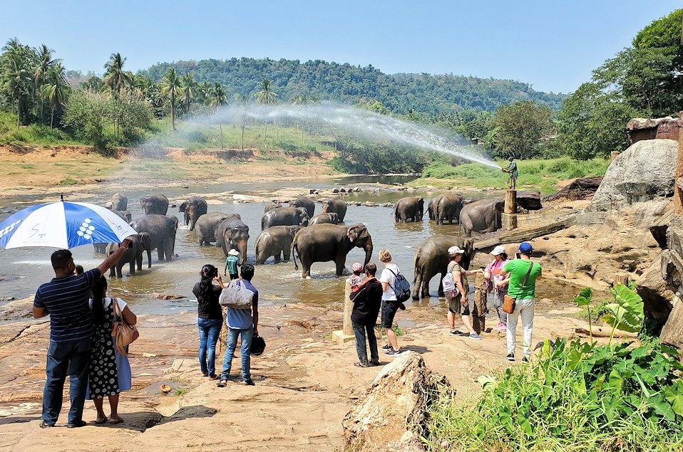 ピンナワラの街にある川沿いで水浴びする、孤児院のゾウさん達
