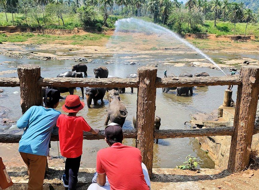 ピンナワラの街にある川沿いで水浴びする、孤児院のゾウさん達を眺める人達-2