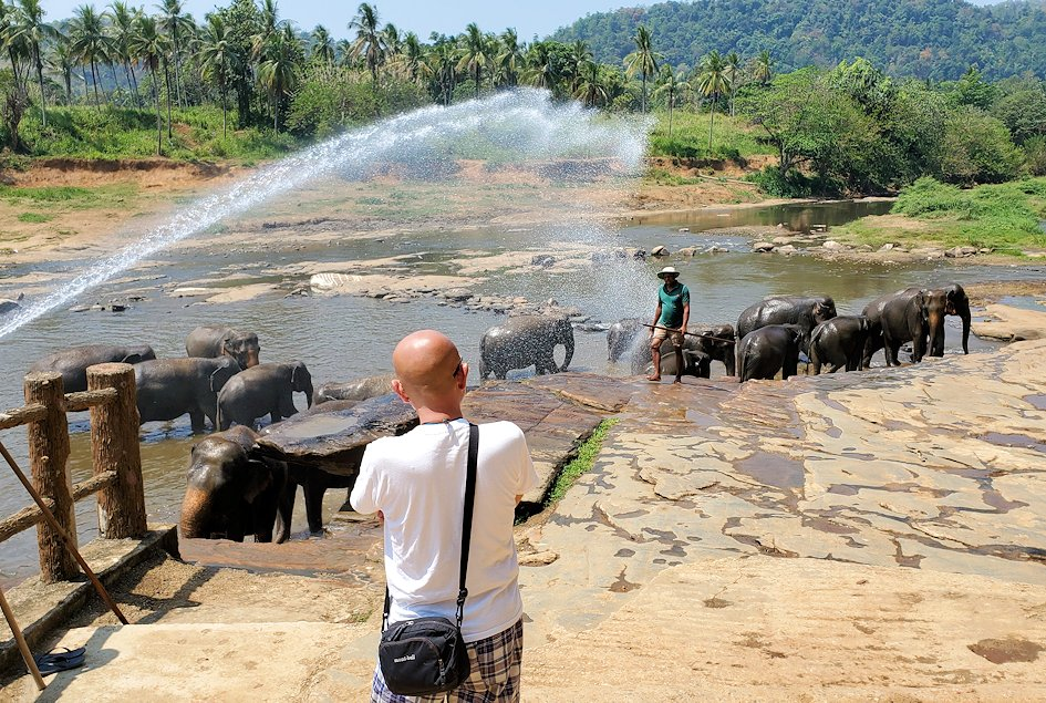 ピンナワラの街にある川沿いで水浴びする、孤児院のゾウさん達-3