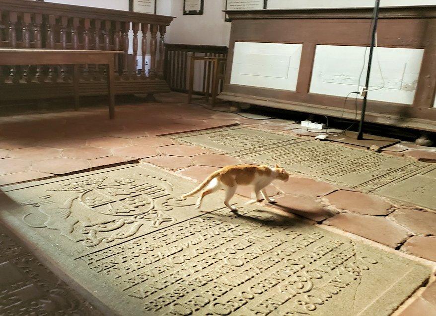スリランカ:ゴールの旧市街地にあるオランダ教会の床にある墓石の上を歩くネコちゃん