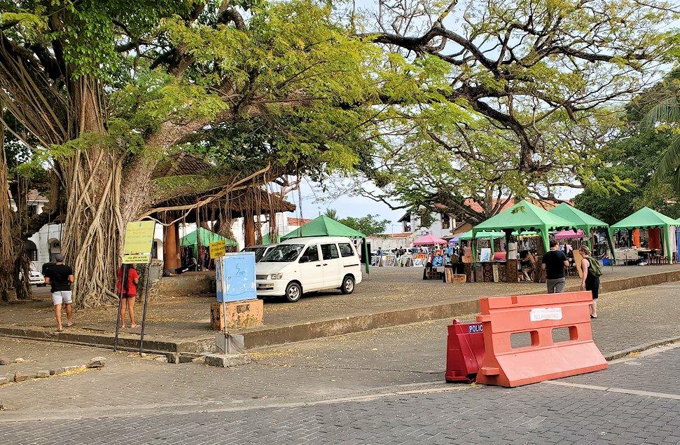 ゴールの旧市街地で見られた、広場に生えるガジュマルの木