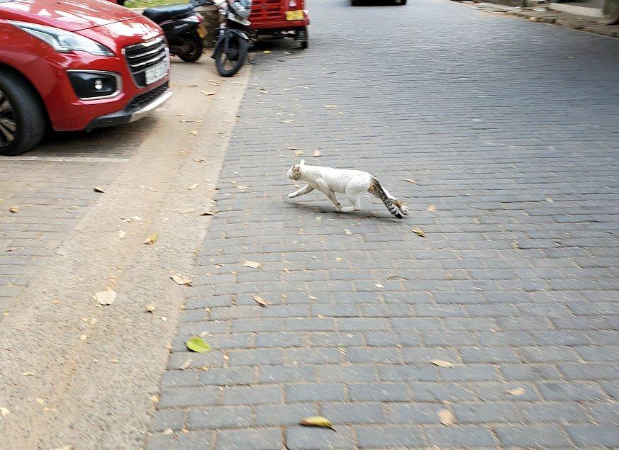 ゴールの旧市街地で見かけた猫ちゃん