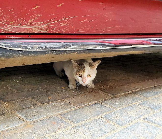 ゴールの旧市街地で見かけた猫ちゃん-2