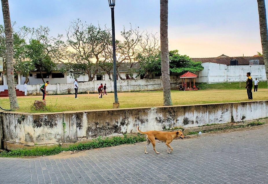 ゴールの旧市街地の運動場でまだクリケットをする人達
