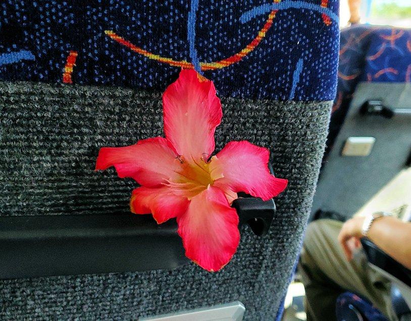 バスドライバーさんから貰った、ハイビスカスの花
