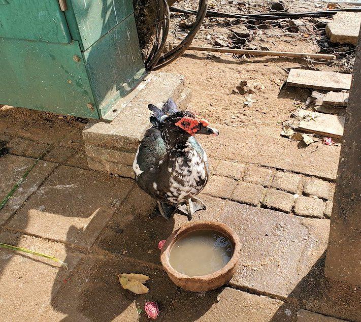 シーマ・マラカヤ寺院周辺にいた、珍しい外観をした鳥