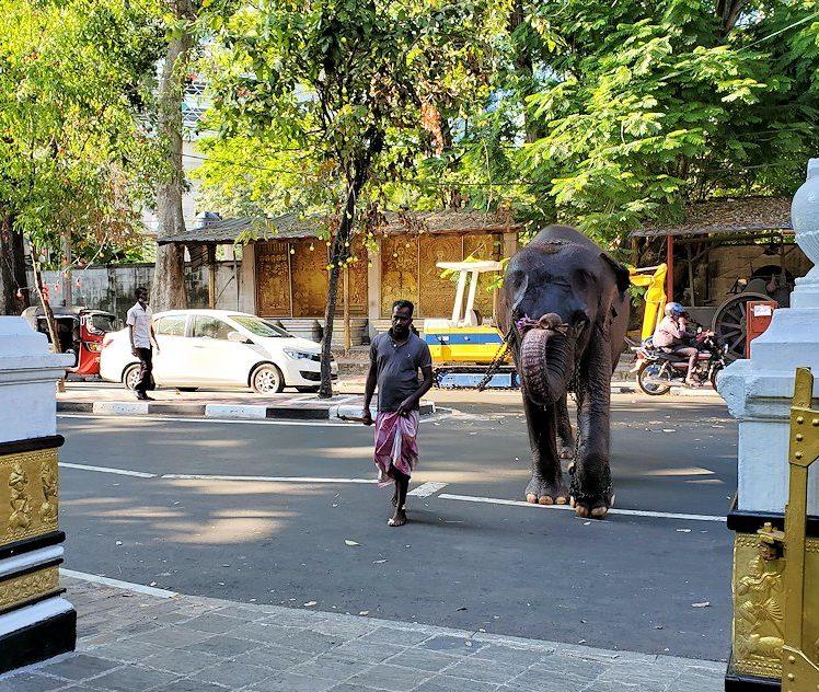 ガンガラーマ寺院で飼っているゾウが歩いて来る