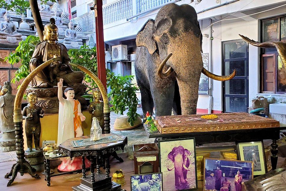 ガンガラーマ寺院敷地内にある博物館にある、先代ゾウの剥製
