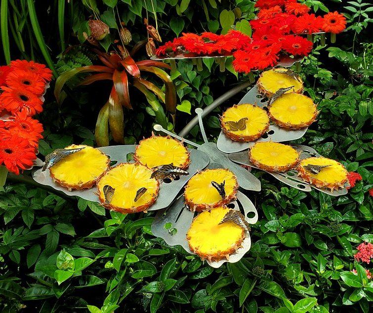 チャンギ空港内の自然溢れるスペースで蝶々が集うパイナップル