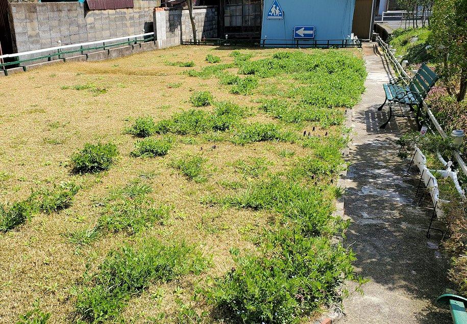 親父が手入れしていた庭の芝生には草がボウボウに