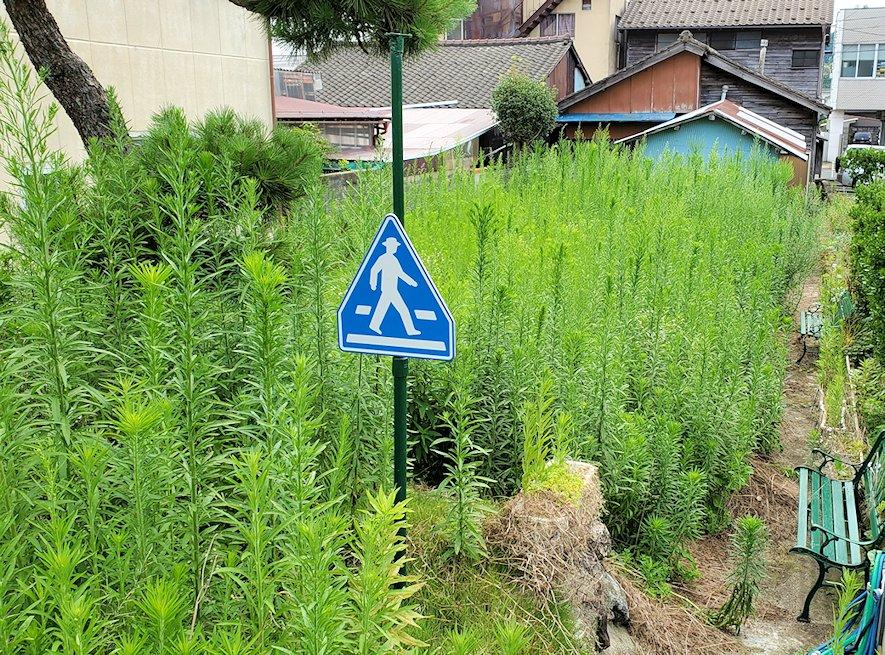 親父の家の芝生が、なんと夏を過ごしたらこのように雑草がぼーぼーに生えてしまった・・・