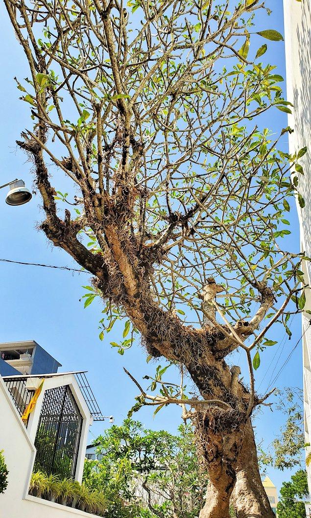 「ジェフリー・バワ」が事務所の前に生えていた木